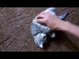 Отдам котенка, девочку, в хорошие ручки!!!! Очень умная, активная, игривая!!!!!