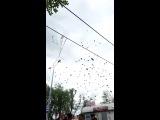 Запускаем голубей))))