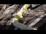 Смелый Зелёный ЯщериЦ (в ботсаду)