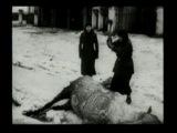 Документальный фильм о Харькове в период оккупации